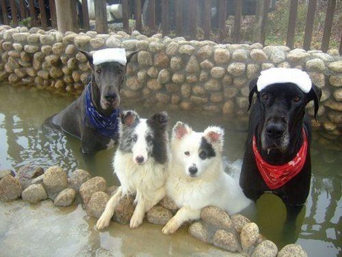 ワンコのための天然温泉