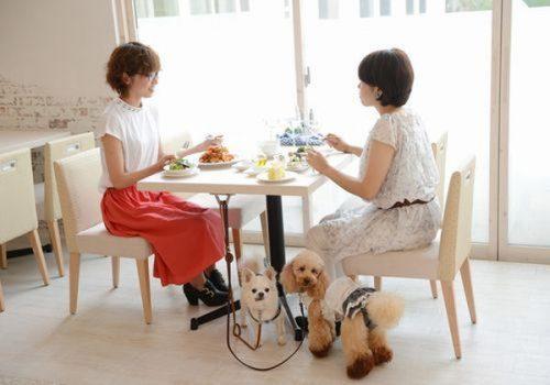レストランも愛犬と一緒